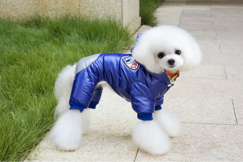 Y122_New_arrival_Winter_Pet_Dog_Cotton_Clothes_Super_warm_Puppy_dog_Four_Legs_Ski_suit_Costume_Clothes_Chihuahua_1