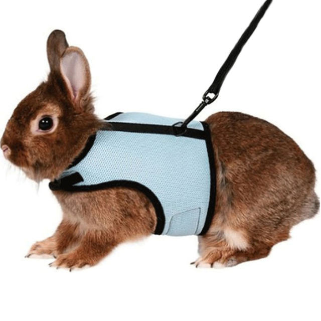 Online shop 4 colors hamster rabbit pet harness with lead set ferret 4 colors hamster rabbit pet harness with lead set ferret guinea pig small animal pet walk lead leash bunny little pets xs l publicscrutiny Gallery