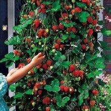 1 lot 200 seeds red climbing strawberry Seeds fruit seeds bonsai home&garden