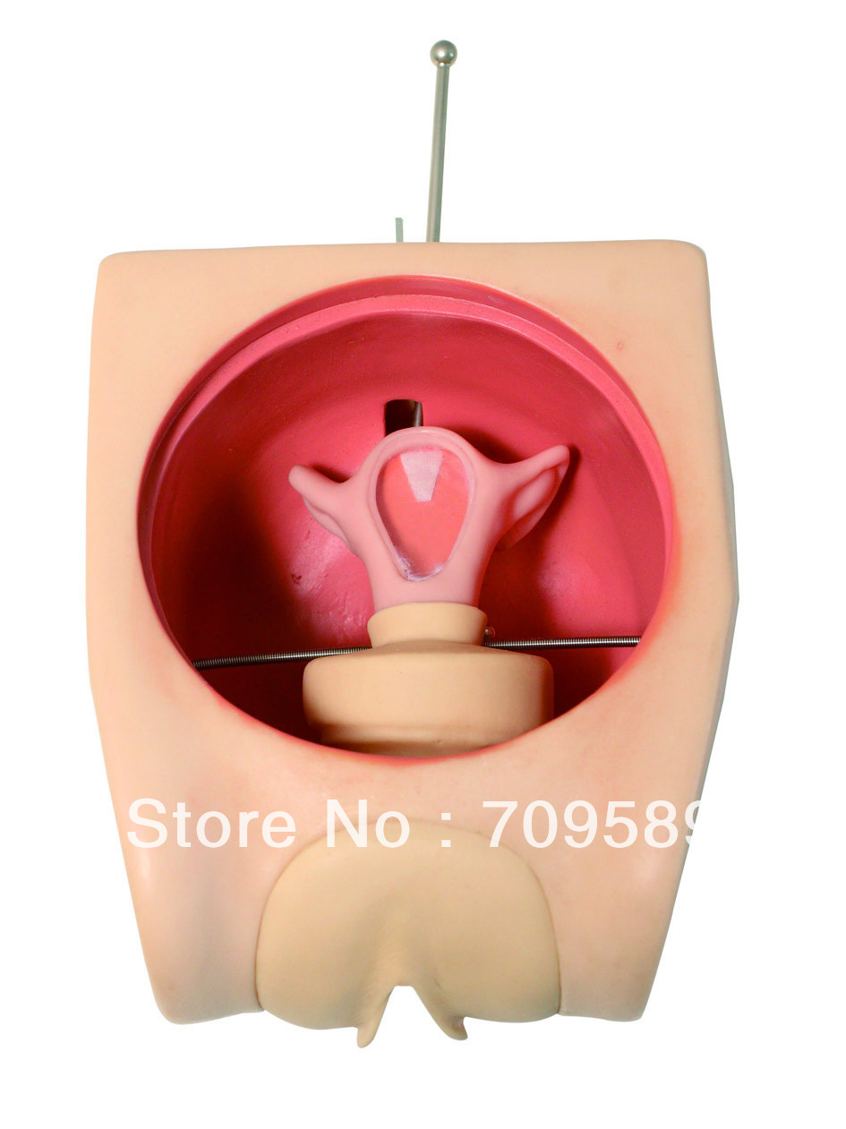 ISO Advanced Birth Control Model, Family Planning Education model, Contraception Simulator, IUD Model pregnancy development model embryo family planning model birth planning display model fetal model uterus