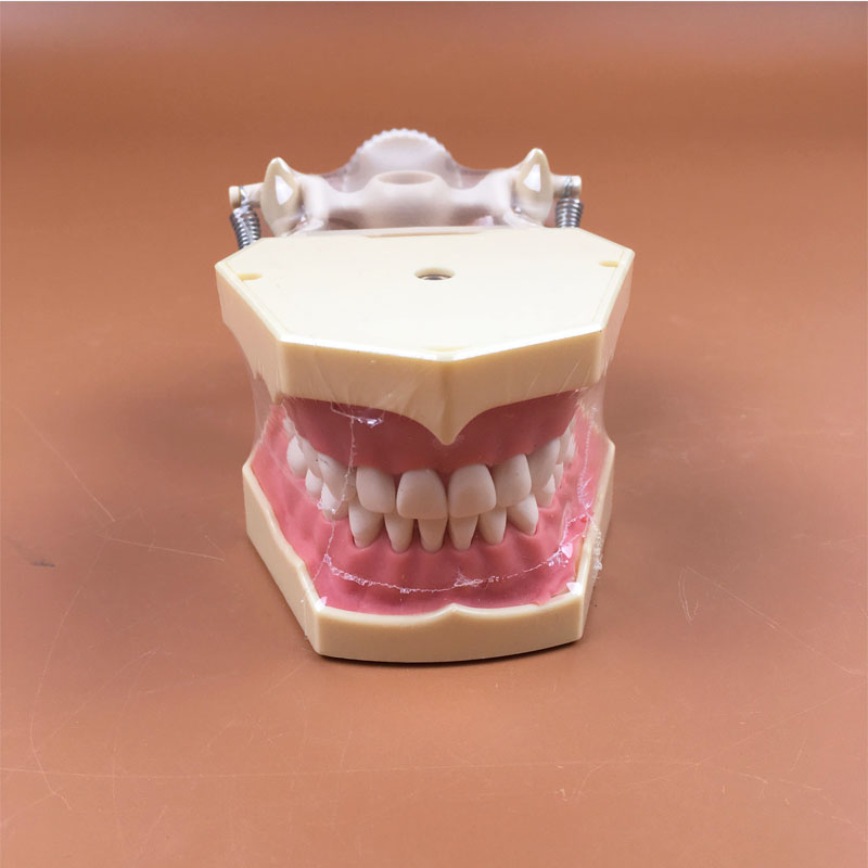 1 pezzo Tipo SF Studio Modello Dental Studio Modello Denti Modello Ortodonzia Modello Standard1 pezzo Tipo SF Studio Modello Dental Studio Modello Denti Modello Ortodonzia Modello Standard