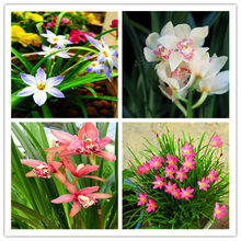 Orchidée Phalaenopsis Promotion-Achetez des Orchidée Phalaenopsis ...