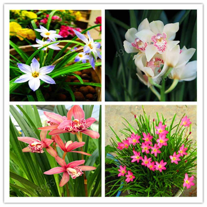 Grande Vendita! 100 pcs Rare Cymbidium Piante di orchidee Africano Cymbidiums Plantas, Phalaenopsis bonsai fiore per la casa vaso da giardino