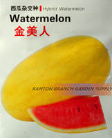 1 Original Pack 100 Seeds Pack Great Quality Yellow Skin Red Juicy Fruit F1 Hybrid Watermelon
