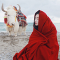 2017 Venta Caliente de La Bufanda Mujeres Chal Bufanda de la Señora Bufanda Del Abrigo Plus tamaño Natural Puro Color Keep Warm Cashmere 4 Color Disponible MT257
