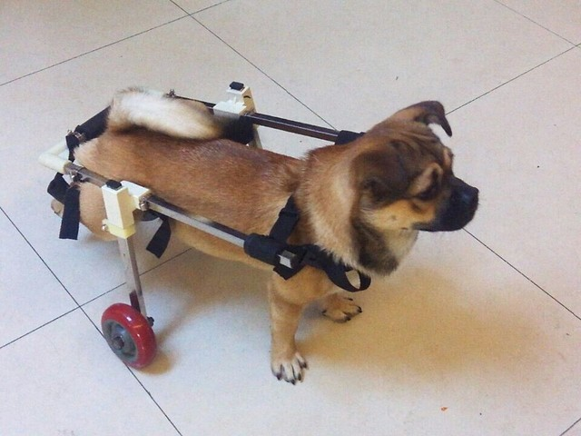 US $169 0 |Custom cat and dog paralysis wheelchair, disabled dog scooter,  pet hind legs wheelchair, paralyzed dog cart-in Agility Equipment from Home