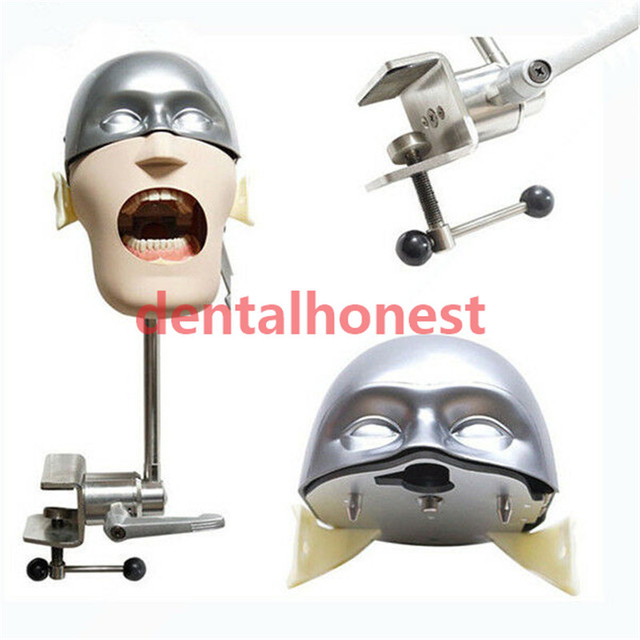 2019 high quality Stainless steel head model NISSIN Dental manikins and models Phantom Head Dental