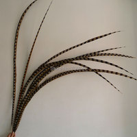 20pcs/lot!55 59inch(140 150cm)Natural Loose Reeves Pheasant Tail Feathers for Costumes decor,Long Pheasant Tail Feathers