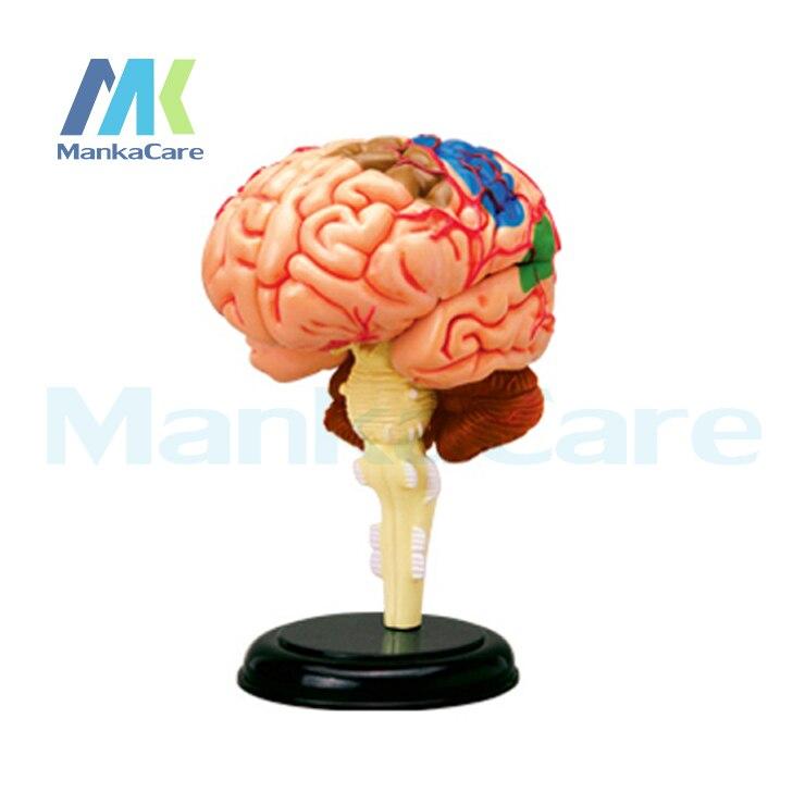 4D master gehirn struktur montiert Menschlichen Anatomie dimensional ...