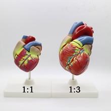 2 шт. 1+ 3 раза большой, ПВХ сердечная Анатомия сердца манекен для медицинского обучения инструмент учебный инструмент клиника фигурки