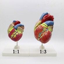 2pcs 1+3 times big PVC  Cardiac anatomy heart model Medical teaching tool  instructional tool Clinic Figurines