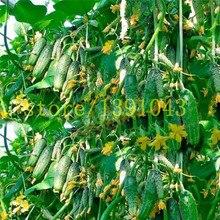 50pcs/bag mini cucumber Bonsai,Miniature cucumber,Organic fruit vegetable Plantas,miniature garden,rare plants for ho