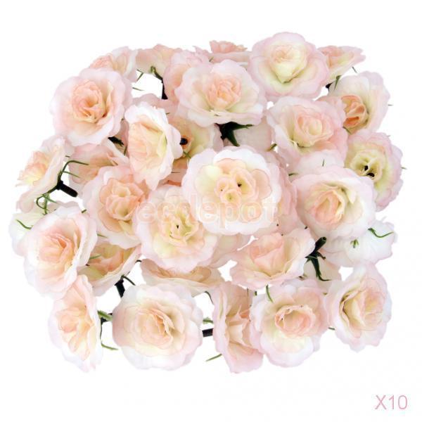 premium garden rose baronesse