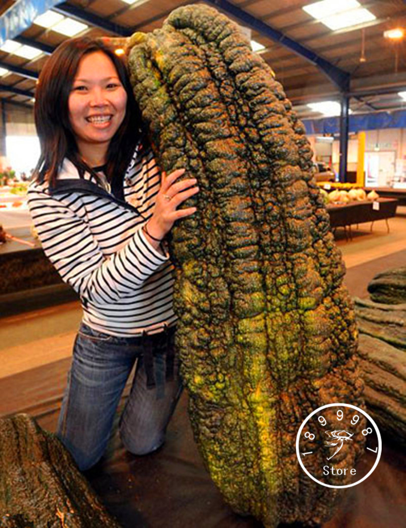 10 Pcs/Lot Promotion! Rare Bean Bonsai, Giant Plant Flores, Garden Decoration Vegetable Plantas,#YRPS3Q