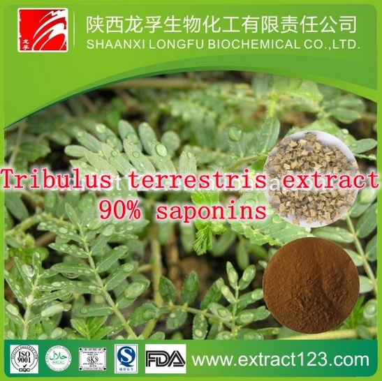 1 Pack natural Tribulus terrestris extract 90% saponins caps 500mg x 300caps free shipping