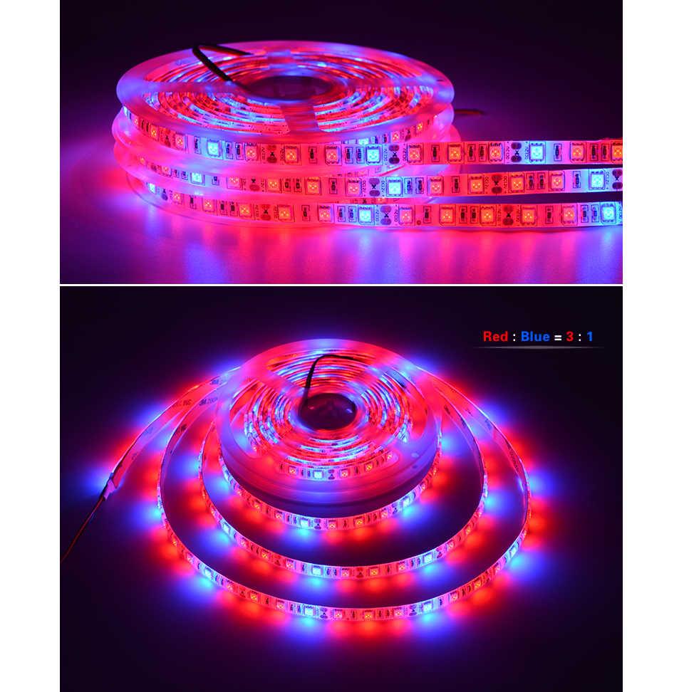 شاشة ليد بطيف كامل تنمو ضوء DC12V تزايد LED قطاع نمو النبات ضوء مجموعة مع الاتحاد الأوروبي/الولايات المتحدة محول والتبديل الأحمر + الأزرق 3:1 4:1 5:1