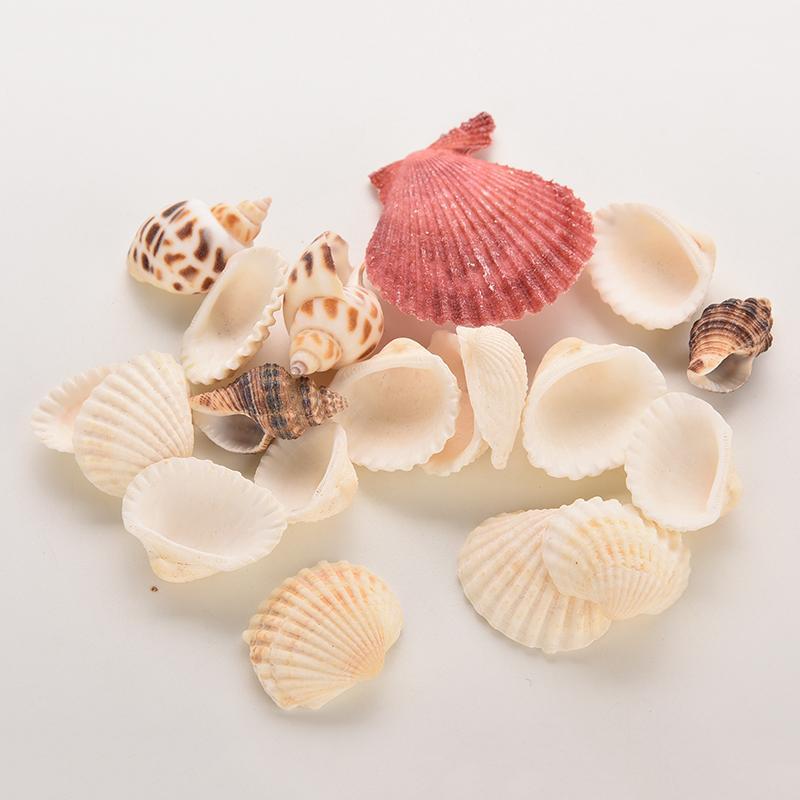 70g bag beach mixed seashells mix sea shells shell craft for Bag of seashells for crafts