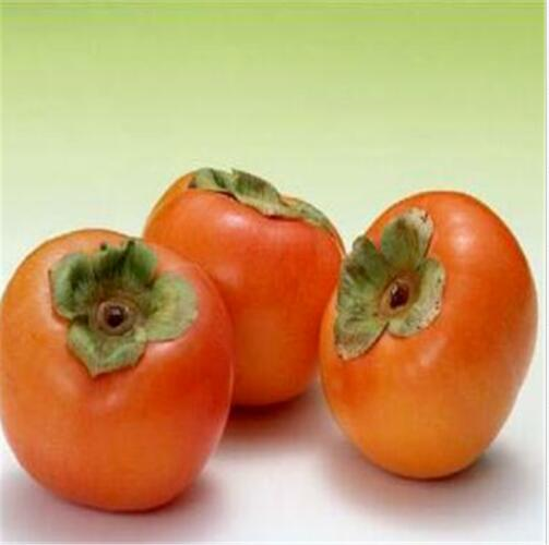 Persimmon Fruit Tree Seeds Diospyros Kaki Sweet Fruit Garden Plant 20 seeds/pack