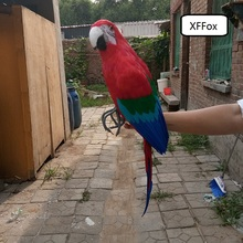 big real life parrot model foam&feather simulation Macaw bird gift about 60cm xf0216