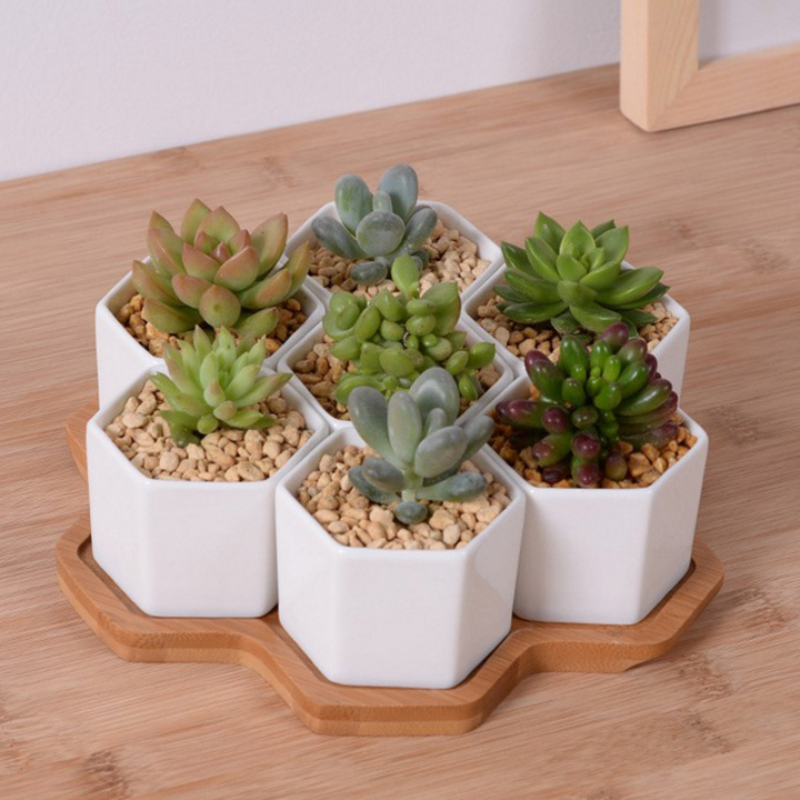 Set of 4/7/9/10 Hexagon Flowerpots White Ceramic Succulent Plant Pot with Bamboo Stand Home Office Christmas New Year Decoration hedgehog cactus