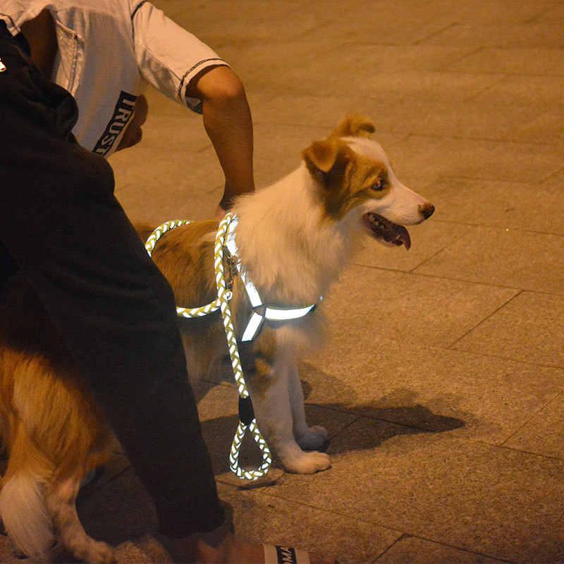 Chó Lớn Cổ Áo Và Dây Dây Nylon Pitbull Cá Tính Cho Vòng Cổ Thú Cưng Mèo Phụ Kiện Tiếp Liệu Harnais Chiến Hondenjas