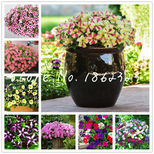 Time-Limit!!100 Pcs Hanging Petunia flores Melissa Original Flower plantas Perennial Flowers For Home Garden Bonsai Pot Planting(China)