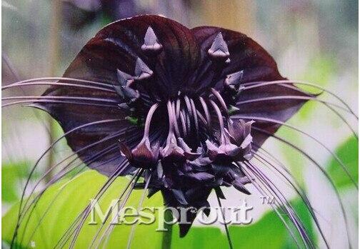 горшки для орхидей заказать на aliexpress