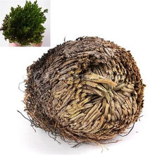 New Hot Practical Live Resurrection Plant Rose Of Jericho Dinosaur Plant Air Fern Spike Moss(China)