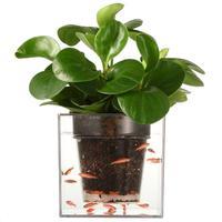 1 st Kantoor Desktop Automatische Druppelirrigatie Bloempot Hars Plastic Plant Pot Planter Crystal Cube Transparant aquarium s15