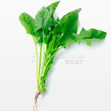"400 Spinach ""Bloomsdale Long Standing"" seeds~Organic"