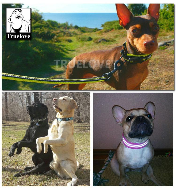 Collar para perro Nylon con acolchado de malla reflectante 10