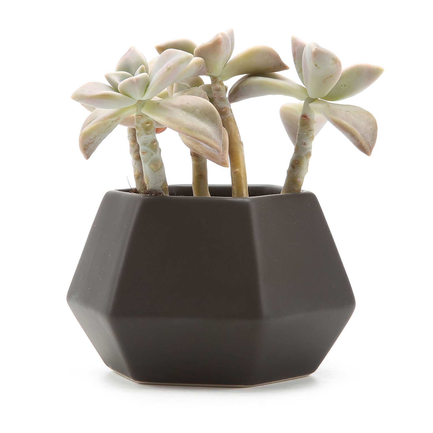 Cactus Planting Pots Us 7 47 49 Off T4u Ceramic Hexagonal Pattern Semi Luster Surface Succulent Plant Pot Cactus Plant Pot Flower Pot Container Planter Matte Black In