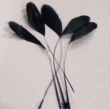200pcs/Lot 15-20cm Black Masquerade Chicken Feather Cocktail Hat Feathers Free shipping
