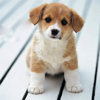 pet-dog-cat-bath-brush-comb-rubber-glove-hair-fur-grooming-massaging-massage-mit-2312cm