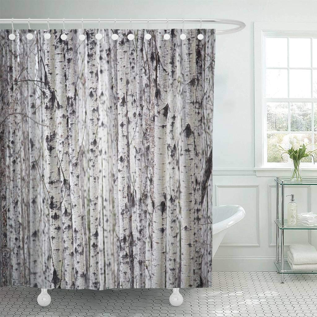Shower Curtain Hooks Canada Personal Perspective If You Get Lost In Birch Forest Spring Trees Alberta Alone Decorative Bathroom Curtains From Home