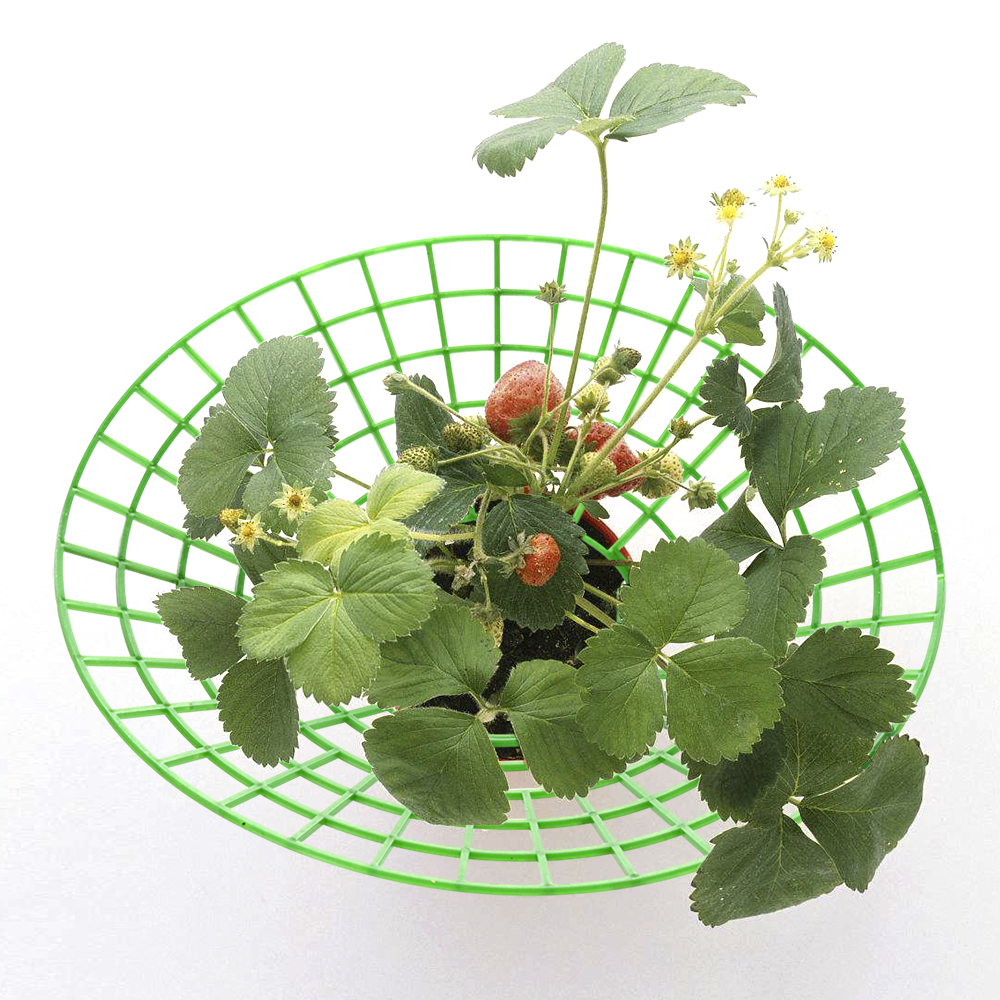 1 Piece Handy Strawberries Growing Removable Keep Plant Off Rot 27cm Strawberry Supports Stand  In The Rainy Days