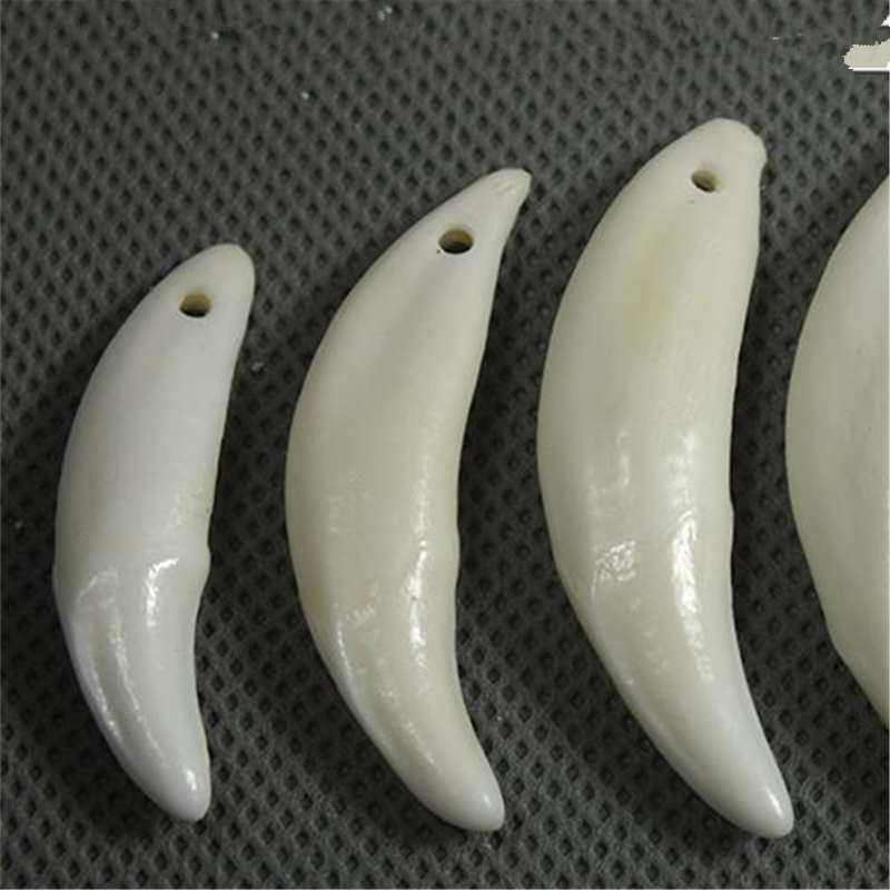 Tbp5842 Whole Tibet Wolf Teeth Amulet For Man Tibetan Mastiff Fangs 20mm Till 40mm 50pcs Lot