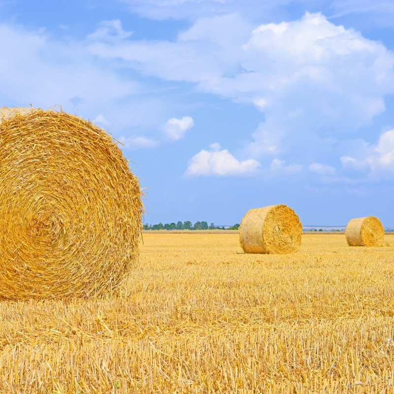 Laeacco Countryside Hay Bales Farm Field Scenic Portrait Photography Backgrounds Custom Photographic Backdrops For Photo Studi