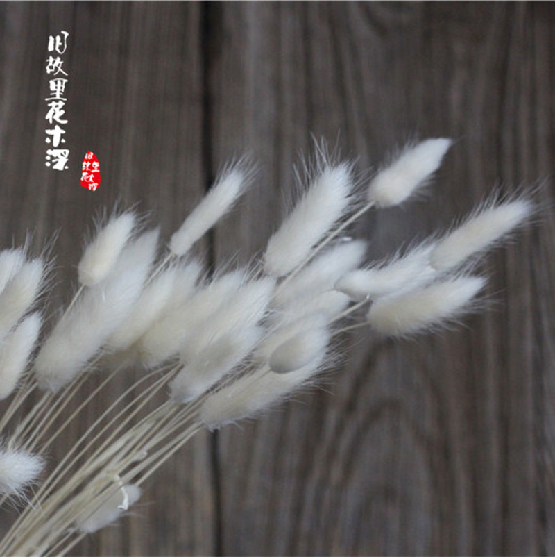 Hot Sale Simulation Natural Rabbit Tails Dog s Tail Grass For Decoration  Plants Home House Jiugu in Artificial   Dried Flowers from Home   Garden on. Hot Sale Simulation Natural Rabbit Tails Dog s Tail Grass For