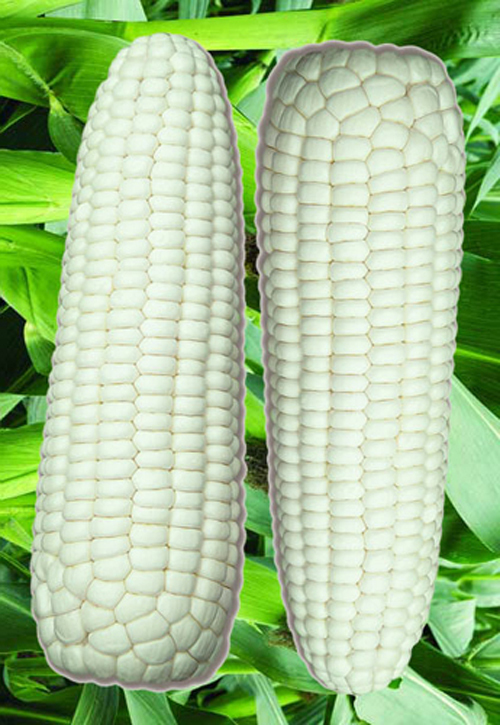 Compare Prices on Waxy Maize- Online Shopping/Buy Low Price Waxy ...