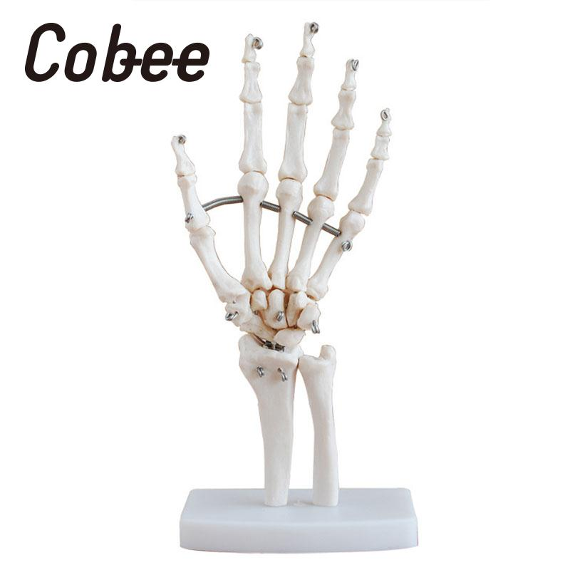 1pcs human body 4d skeleton anatomy skull manikin heart anatomy life size ear model educational puzzle kids medical science toys Hand Joint Model Anatomical Skeleton Skull Medical Science Anatomy Life Movable Articulated Fingers Mannequin Decoration Toys