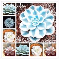 Succulent-seeds-50-particles-lotus-Lithops-Pseudotruncatella-Bonsai-plant-Seed-mix-colors-diy-home-garden-planting.jpg_200x200