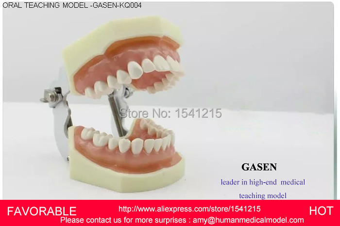 PROSTHODONTICS PRACTICE  DENTISTRY PREPARED TEETH SYSTEM PREPARATION OF GINGIVAL SIMULATION TEETH ORAL TEACHING MODELGASEN-KQ004 матовая помада bell royal mat lipstick 20 цвет 20 variant hex name dd093b