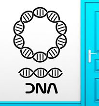 DNA Wall Stickers Genealogy Biology Chemistry School Science Vinyl Decal free shipping