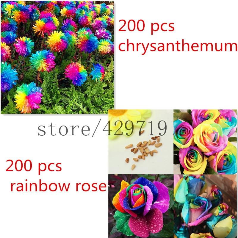Online get cheap send rainbow roses for Rainbow flower seeds