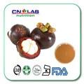 Mangosteen Pulp Extract/Mangosteen Extract/Mangosteen P.E 30% Alpha Mangostin