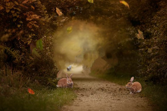 Leaf Leaves Autumn Bunny Halloween Rabbit road backdrops  High quality Computer print children kids background|Background| |  - title=