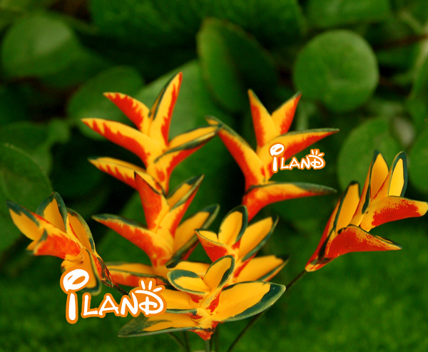 Iland 1 12 Dollhouse Miniature Plant Decorative Clay Bird Of Paradise Flower Free Shipping 6pcs Op02929