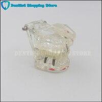 Oral Clinic Transparent Adult Dental Restoration Bridge Tooth Model Removable Dentist Teaching Dental Implant Study