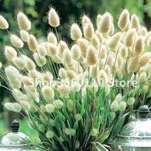 Lagurus Ovatus Grass Bonsai Bunny Tails Tropical Ornamental Plants Flower Decorate Home Garden 100 Pcs